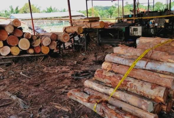PPM Wilayah 5 Sarikei rampas 220 batang kayu balak
