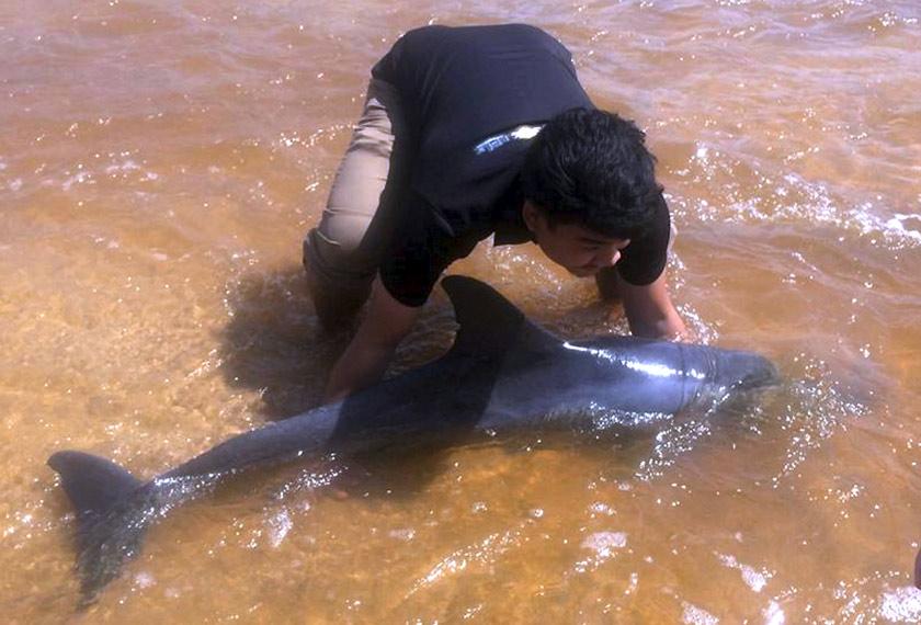 Pelajar tahun akhir Sarjana Muda Sains Biologi Marin Universiti Malaysia Terengganu (UMT) Mohd Nur Aiman Suhaimi, 23, bersama tujuh rakannya menyelamatkan ikan lumba-lumba yang terdampar di Pantai Tanjung Gelam. - Foto BERNAMA