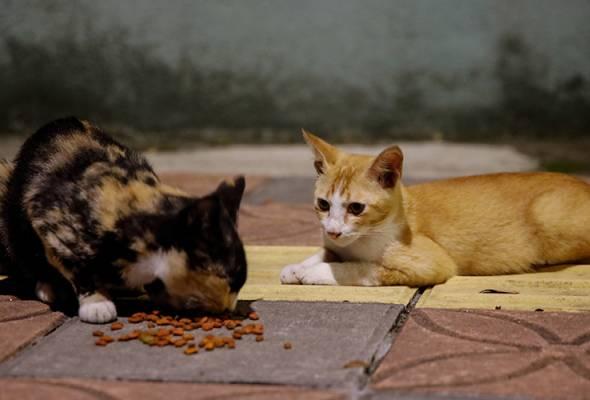 PKP: Persatuan Haiwan Malaysia terima 38 kes haiwan peliharaan dibuang