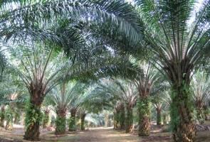 Tindakan boikot sawit dorong tanaman, eksport komoditi kurang efisien - Penasihat PBB 3