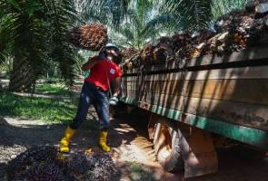 Malaysia kekurangan lebih 500,000 pekerja sektor ladang komoditi 2