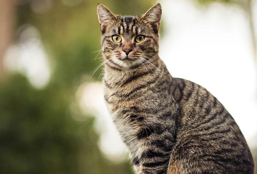 Kelab Kucing Malaysia berharap kes buang kucing tidak meningkat selepas PKP tamat.