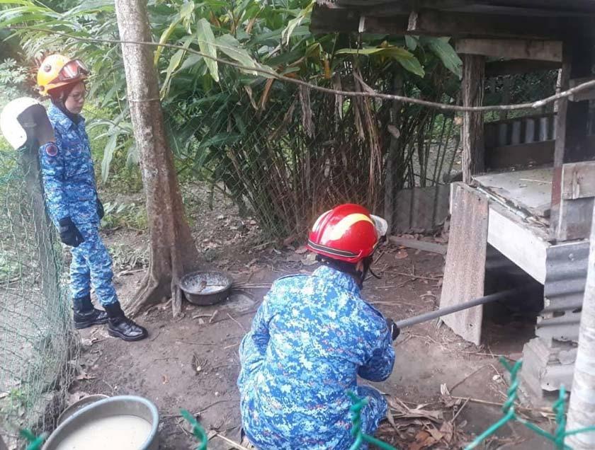 Ular sepanjang lima meter ditangkap anggota APM Padang Terap.