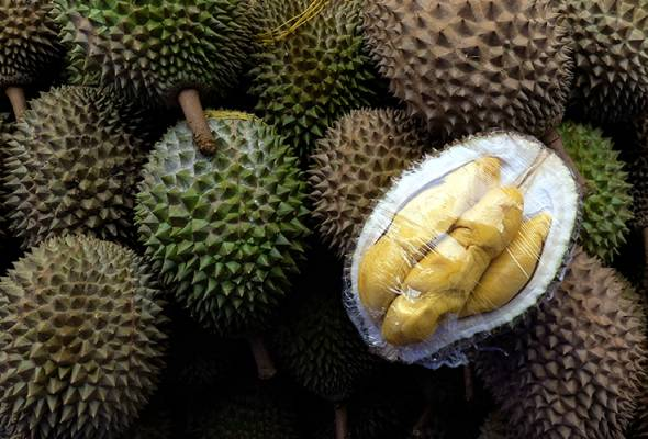Harga durian musim normal baharu mahal teruk?
