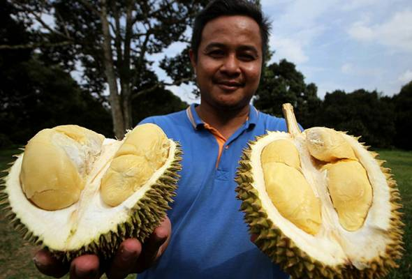 Hasil ladang Duriotourism Kuala Kangsar dijual secara dalam talian