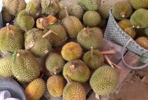 Pekebun durian tawar pakej melancong sambil menikmati durian di Pattani