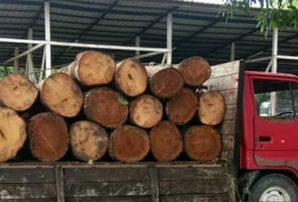 Muslihat malam raya, tiga lelaki ceroboh hutan curi kayu balak