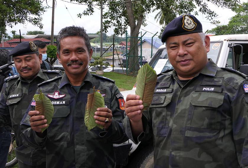 Timbalan Komander Batallion Tiga, Briged Utara, Pasukan Gerakan Am (Kanan) ACP Mohd Nasaruddin M Nasir menunjukkan daun ketum yang dirampas. -Astro AWANI/Fareez Azman