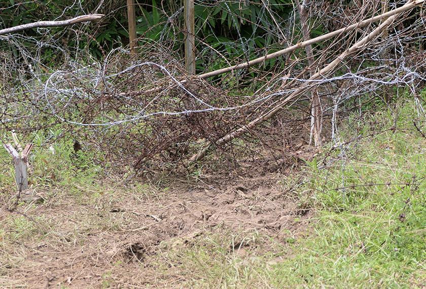 Laluan tikus yang dibuka semula penyeludup meskipun telah ditutup anggota keselamatan. -Astro AWANI/Fareez Azman