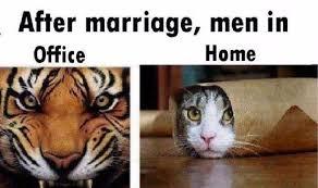 tiger-cat.jpg