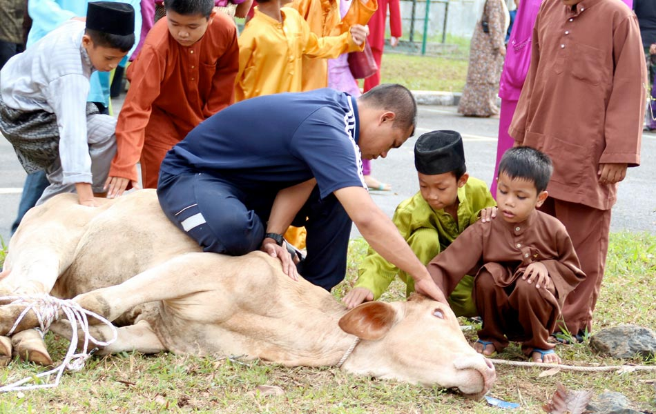 Kids trying to calm a cow before the sacrificial ritual held at the First Division Penrissen Camp's Solahuddin Al-Ayubbi mosque in Batu 8 near Kuching. -- Photo by BERNAMA | Astro Awani