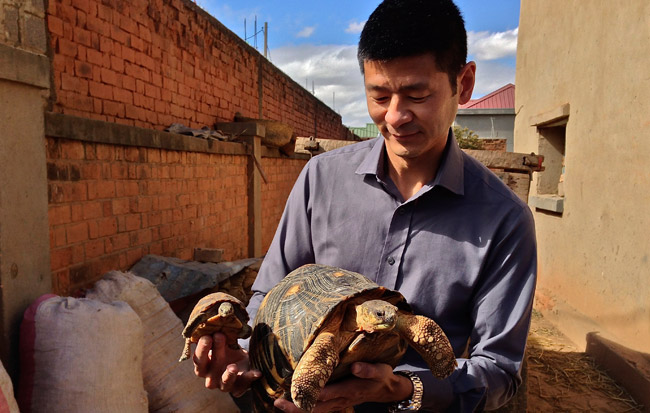 (By Danny Lai) Caption: Posing as an interested buyer, 101 East Presenter, Steve Chao was shown many endangered species of tortoises for sale in Madagascar.  These ones are Radiated Tortoises.