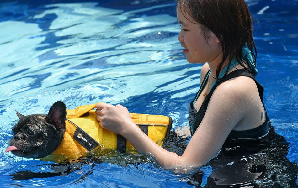 Seorang petugas sedang membawa seekor anjing berenang di dalam sebuah kolam renang yang berbentuk tulang. Hotel ini juga memberi perkhidmatan spa, menyediakan hidangan gourmet dan juga mempunyai bilik penyaman udara untuk haiwan kesayangan pemiliknya. AFP / ROSLAN RAHMAN
