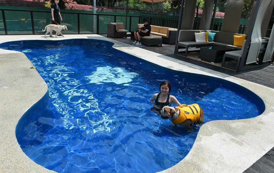 Kelihatan seorang petugas hotel sedang membawa seekor anjing berenang dalam kolam renang berbentuk tulang.  Pemilik haiwan peliharaan juga boleh menggunakan perkhidmatan lain yang terdapat di dalam hotel ini seperti spa yang menyediakan rawatan kuku, mandian, dan urutan aromaterapi. - AFP / ROSLAN RAHMAN