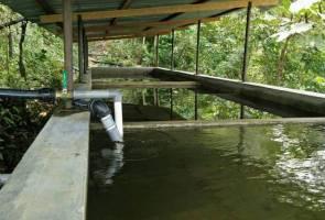 Refarm nafi sumber air dicemari kandang babi