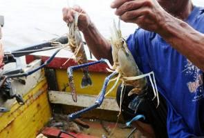 Lambakan udang galah: Jabatan Perikanan perketat pemeriksaan