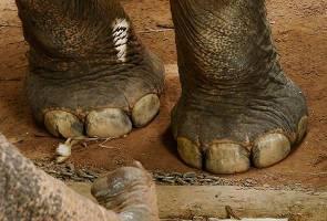 Jawatankuasa buat laporan dakwaan gajah didera di Langkawi - Wan Junaidi