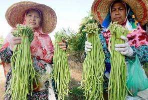 1,181 usahawan tani sertai agro teras, 95 peratus wanita
