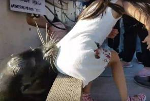 Image result for Video Shows The Terrifying Moment A Sea Lion Yanks A Girl Into The Water