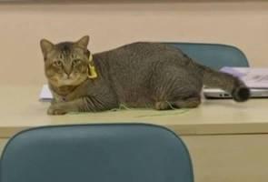 Asal kucing jalanan, kini Labun miliki kad matrik dan ikuti kuliah di UIA