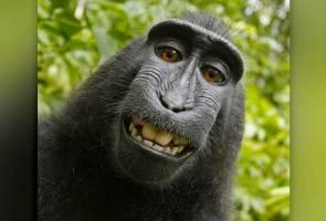 PETA pilih 'monyet tersengih' sebagai Tokoh Tahunan