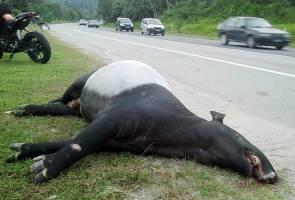 Kongsikan hasil siasatan terhadap pembunuhan spesis terancam - MNS