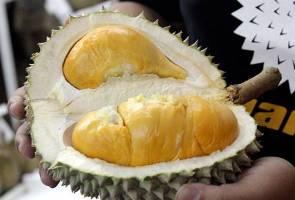 Peminat durian seluruh dunia mendambakan 'Musang King' - Hernan Corporation