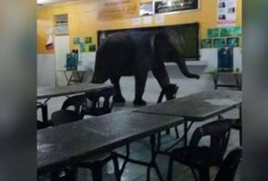 Gajah sesat cari makanan di dewan makan SMK Telupid