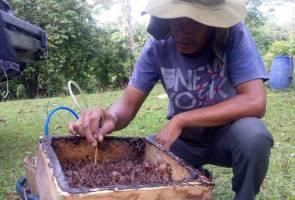 Ternak kelulut sumber pendapatan menguntungkan di pedalaman Terengganu