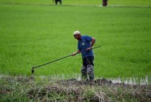 Dakwaan skim insentif pengeluaran padi bekal racun haram tidak benar