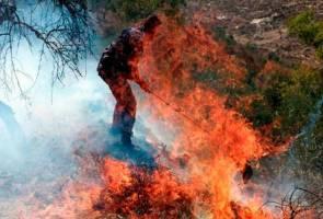 Pendatang Yahudi musnahkan pokok zaitun