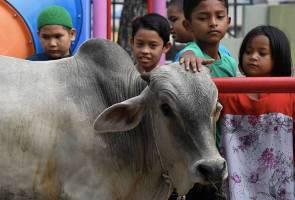 Lembu sado satu tan dikorbankan bersempena Aidiladha