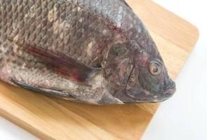 Ikan tilapia di Malaysia selamat dimakan