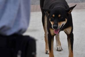 Rabies: Jangan bawa anjing ke kawasan pewartaan sempena Tahun Baharu Cina