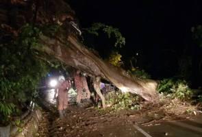 Pokok tumbang di Pulau Pinang akibat hujan lebat, angin kencang