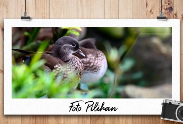 FOTO PILIHAN AWANI: Santuari unggas