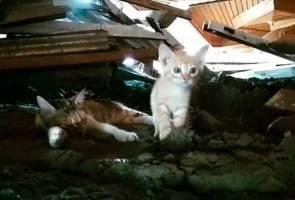 Pasca tragedi gempa-tsunami Palu: 'Si comel' turut menderita