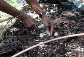 Hujan bukan alasan! Penoreh di Kedah raih RM4,000 usaha tanaman cendawan