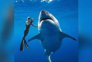 Berenang dengan jerung putih gergasi sepanjang lebih 6 meter!