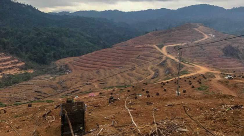 10,000 ekar tanah telah diperuntukkan bagi dijadikan ladang durian. Tempat ini adalah di Pos Simpor. – Foto: JKOAK