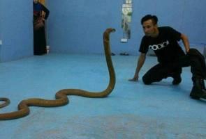 Bomba sukarela tawar khidmat percuma tangkap ular