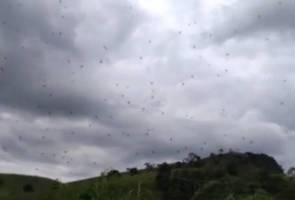 Fenomena labah-labah di udara buat penduduk di Brazil bingung