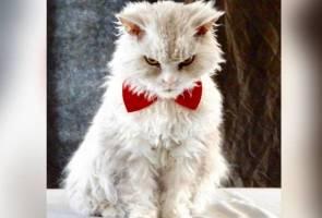 Kucing berwajah 'samseng' curi tumpuan netizen di laman sosial
