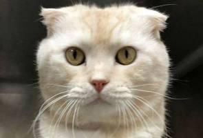 Tak mampu lagi pelihara, pemilik hantar kucing sakit melalui pos