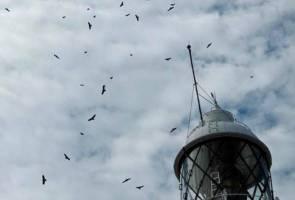 40,000 burung pemangsa bermigrasi melalui Tanjung Tuan tahun lalu