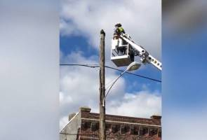Pekerja telekomunikasi digantung tugas gara-gara selamatkan kucing