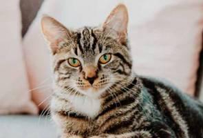 Jangan kecil hati... kucing kenal nama sendiri, tetapi saja buat dek - Kajian 2