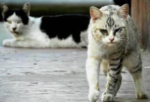Kucing yang suka merayau lebih berisiko terdedah penyakit - Kajian