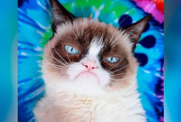 Grumpy Cat mati dalam pangkuan 'ibu', hilang sudah wajah 'marah-marah'