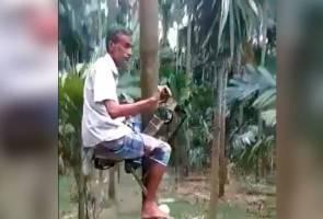 'Motosikal' panjat pokok? Petani ini cipta alat khas petik buah kelapa